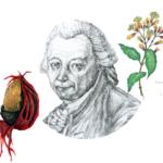 Visuel Pierre Poivre